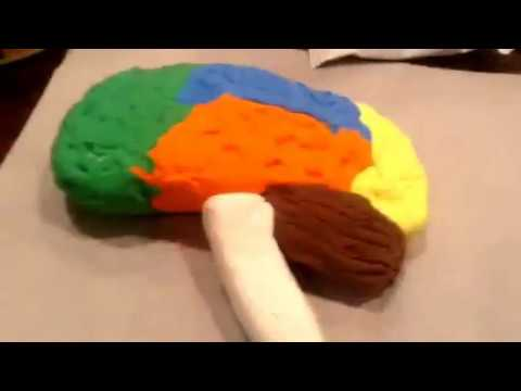 Making A 3d Brain Model Project Youtube