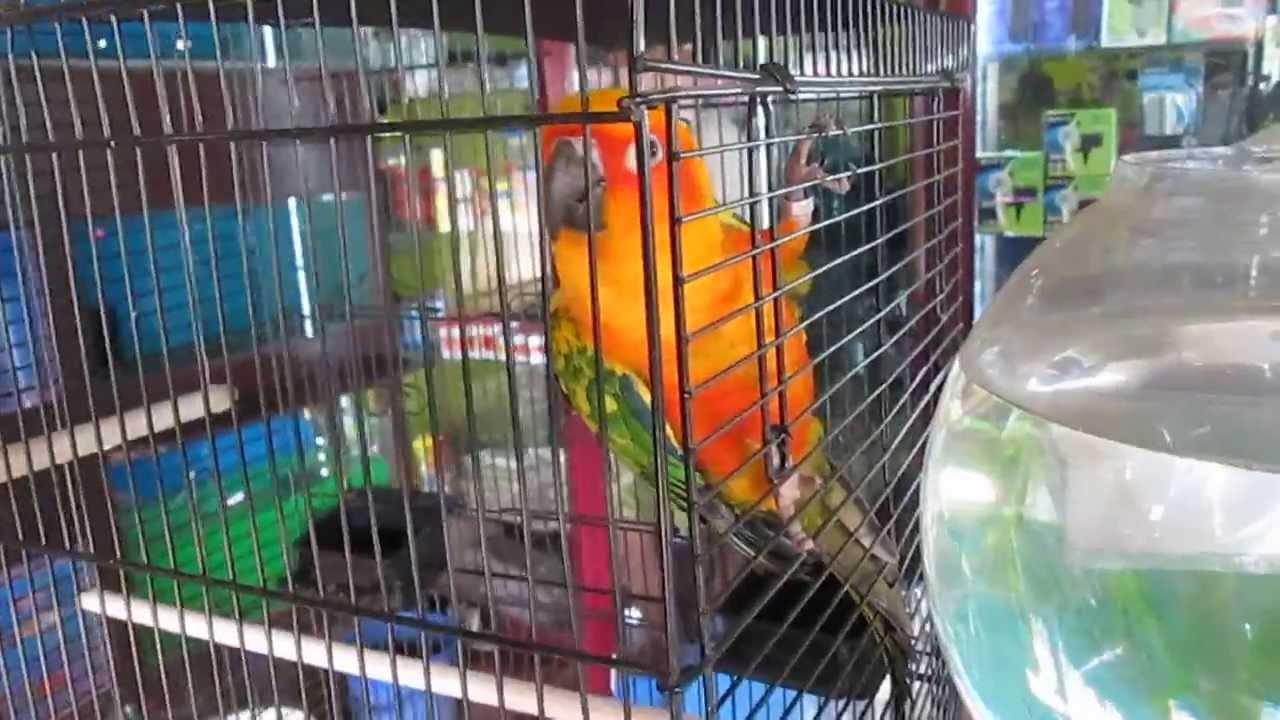 Beautiful Bird For Sale In Kerala India Youtube