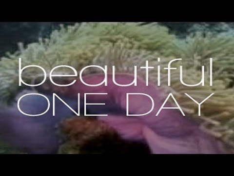Beautiful One Day - Trailer
