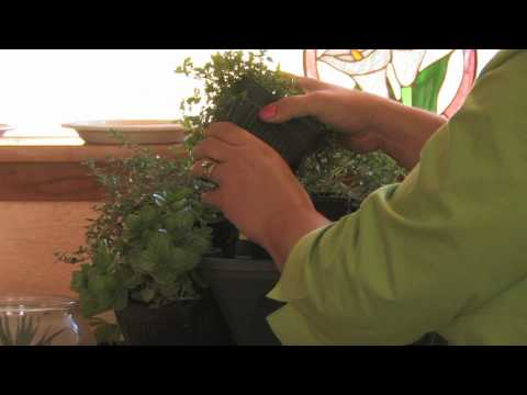 growing herbs how to plant a kitchen herb garden youtube