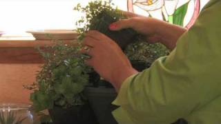 Growing Herbs : How to Plant a Kitchen Herb Garden