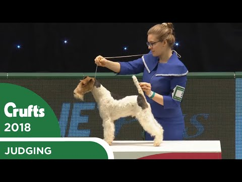 International Junior Handling Competition (First Round) Part 1   Crufts 2018