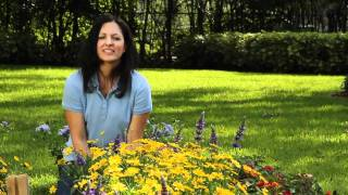 Planting a Butterfly Garden - Flowers for Florida