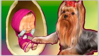 МАША И МЕДВЕДЬ НОВЫЕ СЕРИИ Собака Йорк угадывает что в киндерах машины сказки машкины страшилки(, 2016-09-27T06:05:05.000Z)