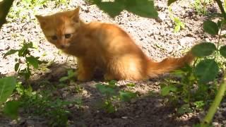 Интересный котёнок. Живое видео. Природа