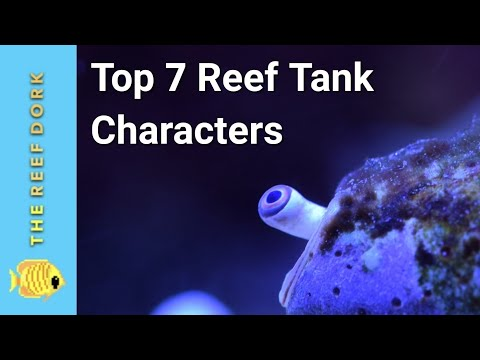 Saltwater Fish With Personality