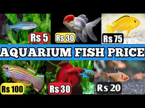 Latest Aquarium Fish Price In India | Aquarium Fish Price In India | #aquariumfishprice .