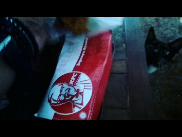 Kucing lucu makan KFC