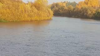 Котенок плывет по реке