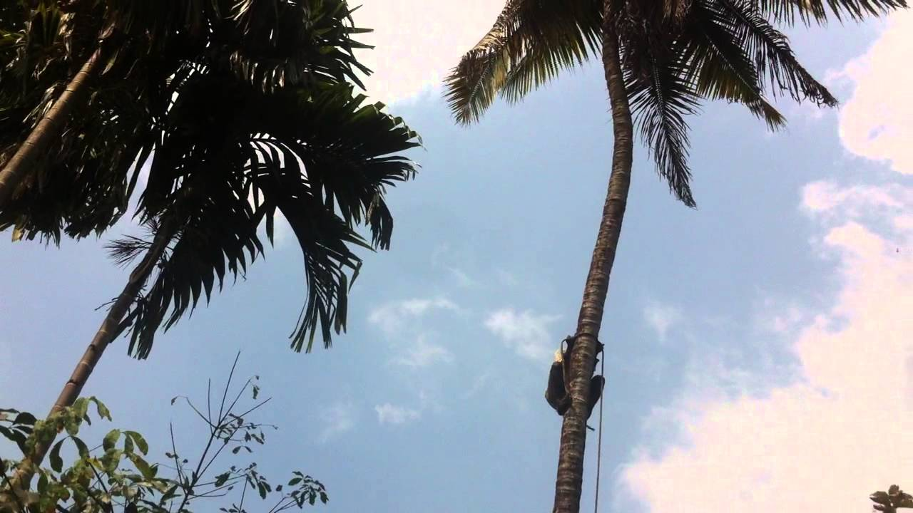 coconut tree climbing machine