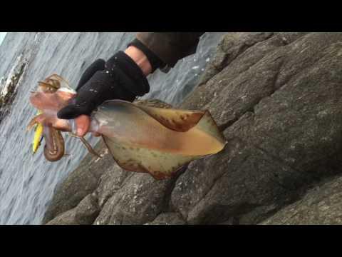 Stonker Squid South Of Tasmania