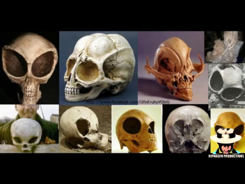 Archaeological Excavations of Non-Human Skulls (Alien Ancestors of our World)
