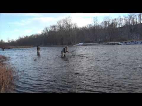 Swing for Winter — Steelhead Fly Fishing