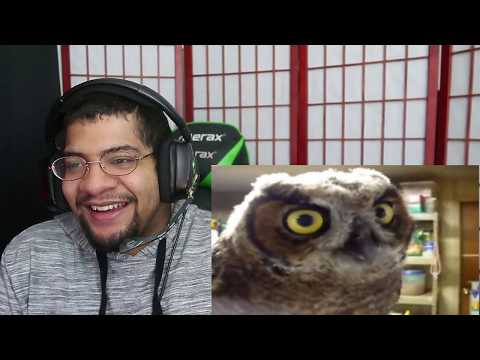 100% Accurate Facts About Owls!