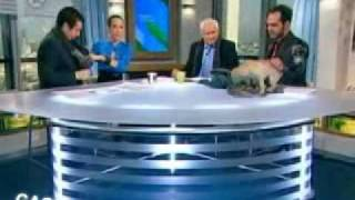 xlete 3 mieszne i zabawne teksty i wpadki w tv jaja w telewizji 3 pl fun gac humor mieszne