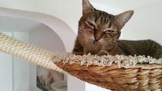 Кошки в доме Как сделать их жизнь комфортной