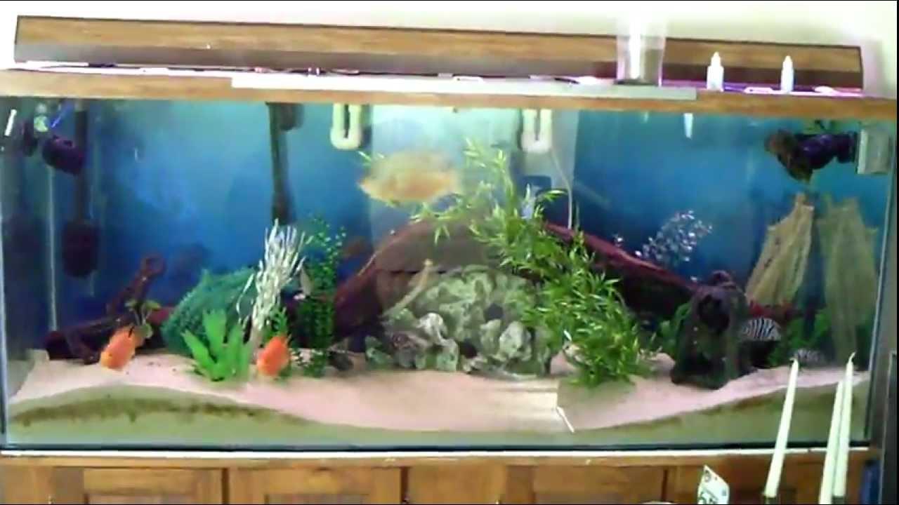 220 gallon aquarium update 10 months avi youtube for 220 gallon fish tank