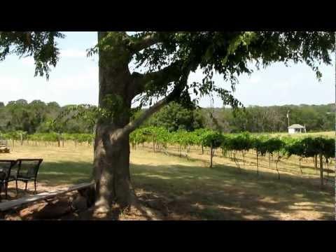 Tara Vineyard & Winery -- Athens, Texas