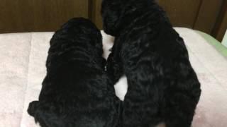 ツッキーの子のみのりとあかり、グーの子のノワールの3匹を比べてみまし...
