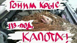 видео Какой утеплитель не грызут мыши и крысы