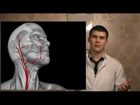 Наружная Сонная Артерия.  Нормальная анатомия