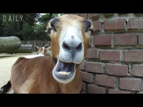 Funny Animals Chewing on Stuff