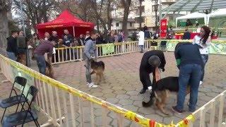 Изложба на кучета FCE CACIB