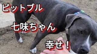七味ちゃん幸せに! Dog Rescue A&Rからのお願い 大変図々しいと思いま...