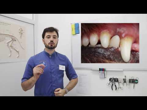Если болят зубы у собаки