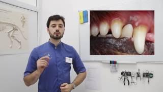 видео Лунтик и его друзья - 33 серия. Зуб