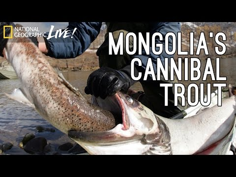 Monster Fish, Part 2: Mongolia's Cannibal Trout | Nat Geo Live