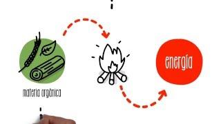 ¿Cómo funciona la biomasa? | ACCIONA