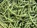 WSZYSTKO o uprawie - Fasola - uprawa warzyw | infoUprawa