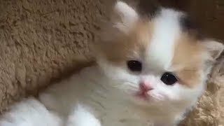 So Very Cute Baby Kittens Videos Cats Compilation #CatDog 17