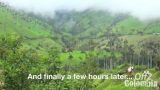 Valle de Cocora Colombia - Trek to the Cocora Valley near Salento
