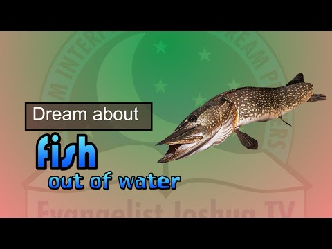 DREAM OF FISH OUT OF WATER - Find Out The Biblical Dream Meaning