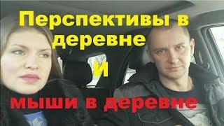 Перспективы мышей в деревне )))