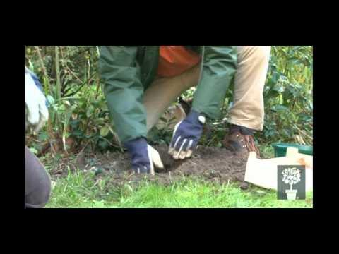 Planter des bulbes de printemps en automne doovi - Comment planter des tulipes en pot ...