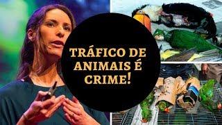 Por que silvestre não é PET? | O tráfico na conta do consumidor