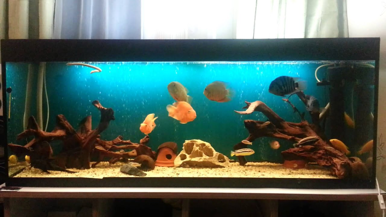 450 liter aquarium youtube. Black Bedroom Furniture Sets. Home Design Ideas