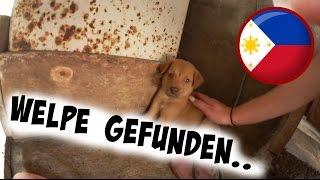 WELPE GEFUNDEN! | AnKat