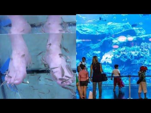 Dubai Mall Fish Aquirium | Fish Pedicure | Fish Videos