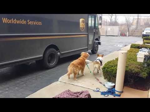 Fisher & Mattie in the Morning - UPS Pet Pages Have Gone Viral On Social Media