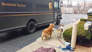 Dogs Love UPS  Compilation