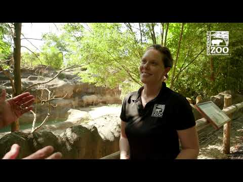 Thane Maynard's Story Safari - Kendi the Black Rhino - Cincinnati Zoo