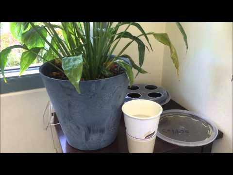 Gnats on Plants - How I Fixed It