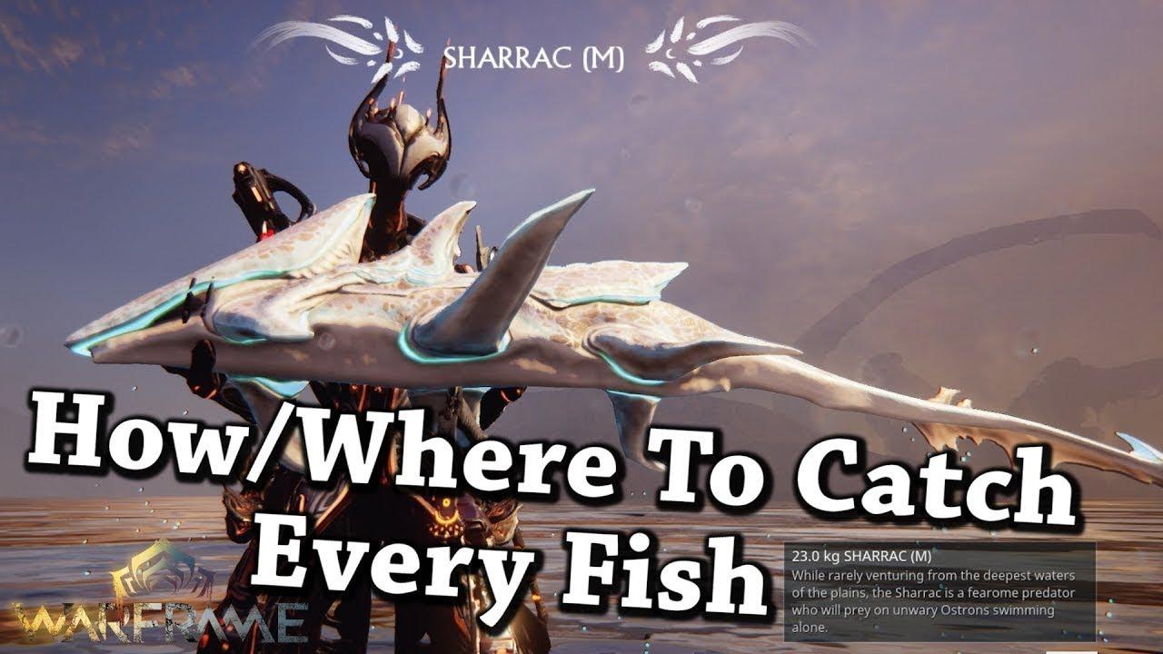 Where fish warframe to Warframe Fishing