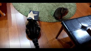 どうしても被っていたいねこ。-Maru insisted on putting on the paper bag.-