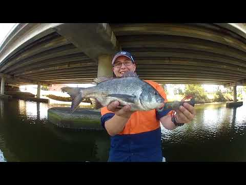 Melbourne Bream Fishing