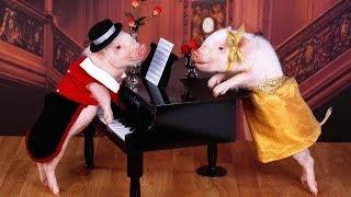 Поздравление с  Новым годом!  С  годом Свиньи!  Ох, нахрюкаемся